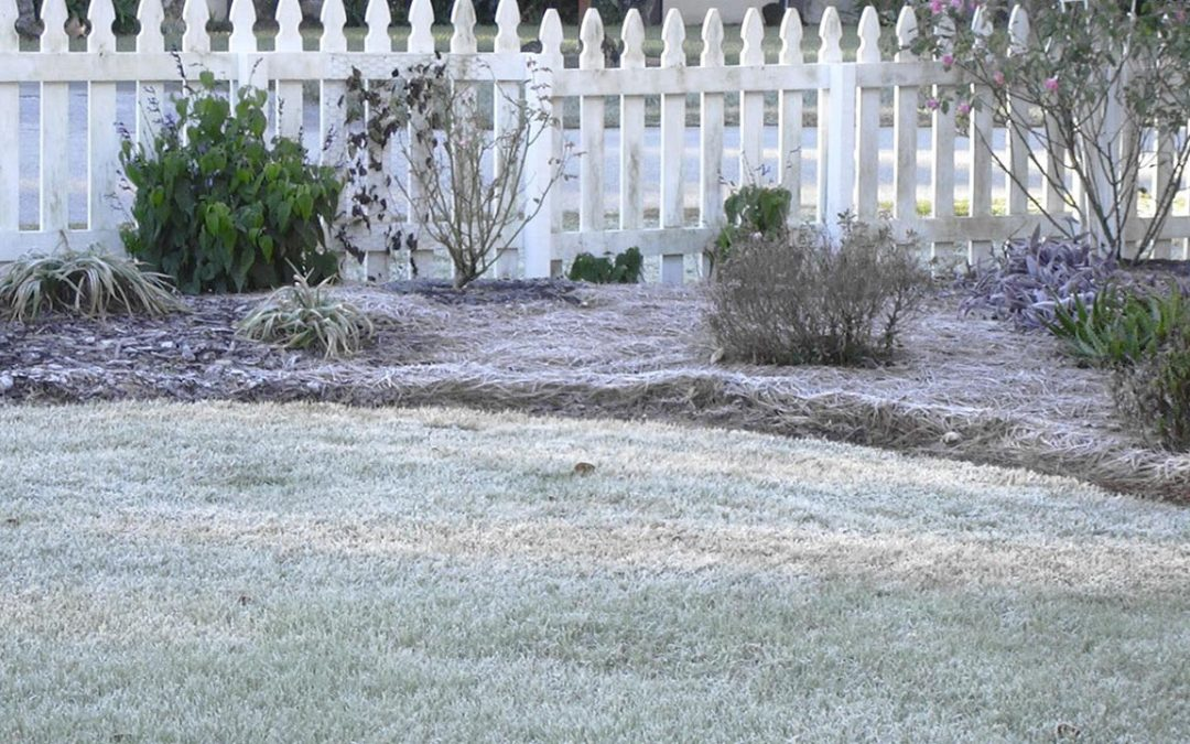 How to Winterize Your Florida Lawn